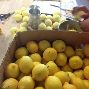 LemonSugarCookieWeb2